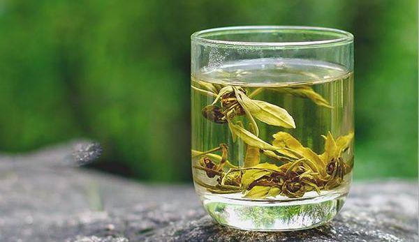 白龍珠 茉莉花茶