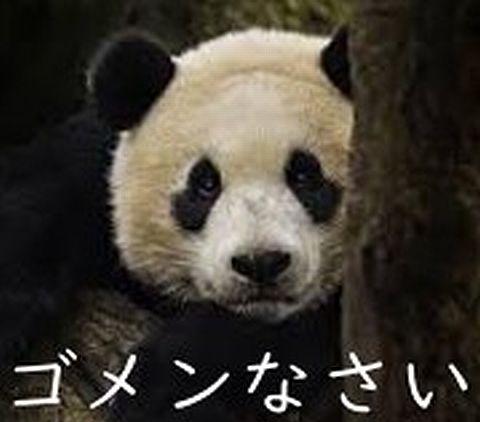 ごめんなさいパンダ