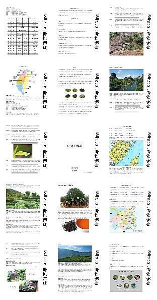烏龍茶専科資料