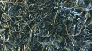 文山包種茶 茶葉