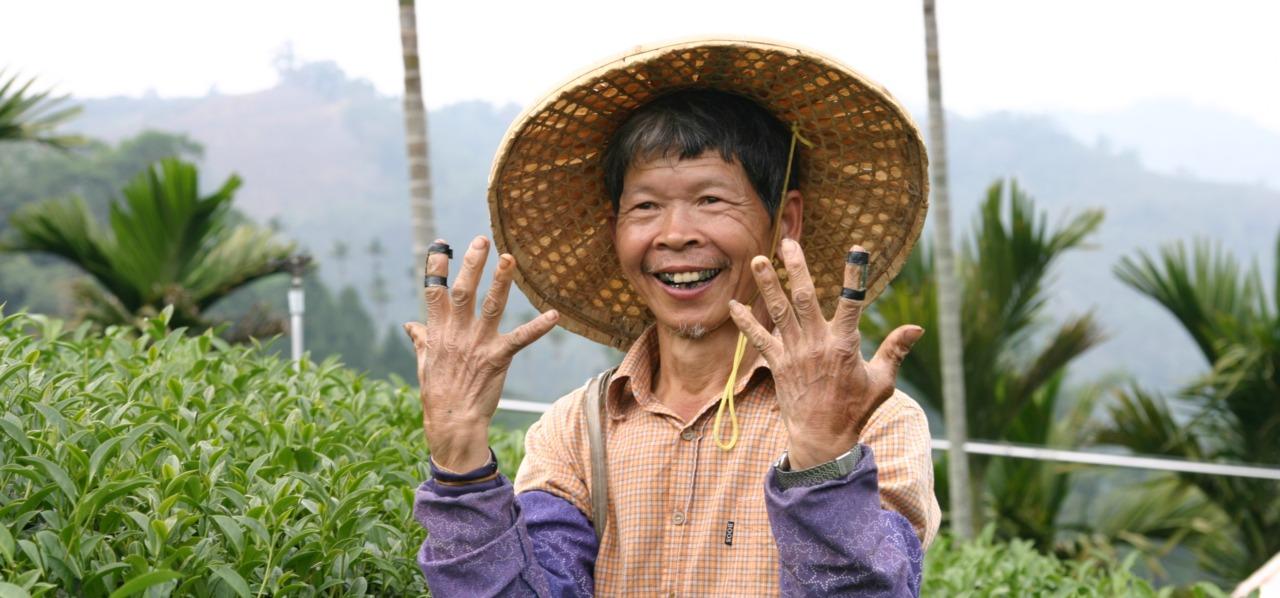 台湾茶を摘む男性