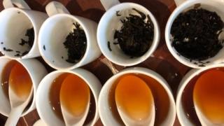 プーアル茶ティスティング風景