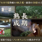 プーアル茶16年発酵は慶光茶荘のオリジナル
