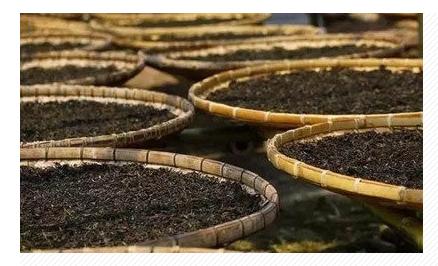 プーアル茶の乾燥風景