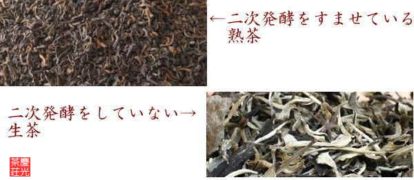 プーアル熟茶と生茶の外観比較