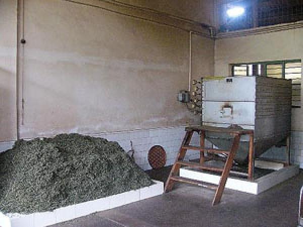 プーアル茶の醗酵風景