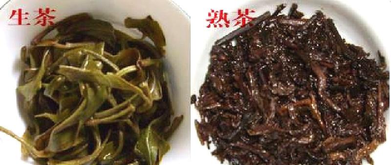 生茶と熟茶の比較