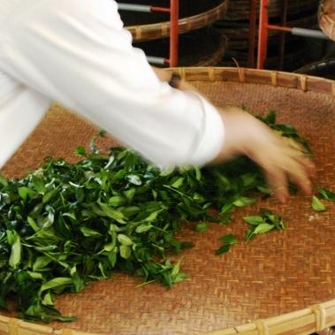 中国茶コラム