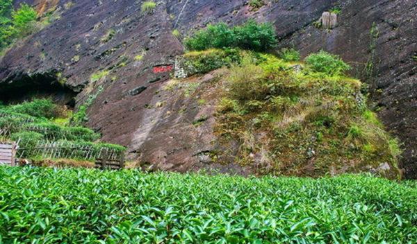 岩茶 畑イメージ