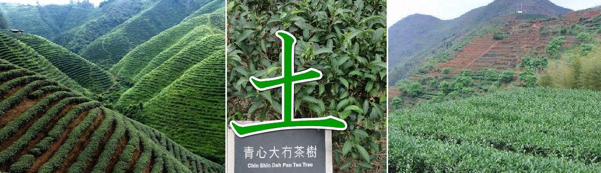 中国茶産地イメージ 土バナー