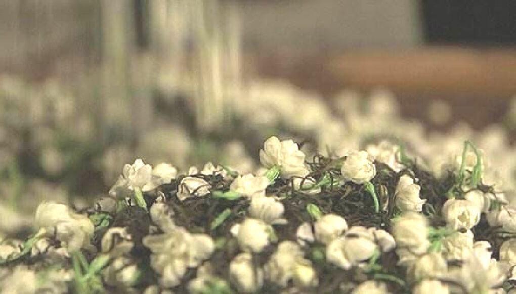 ジャスミン茶の製法