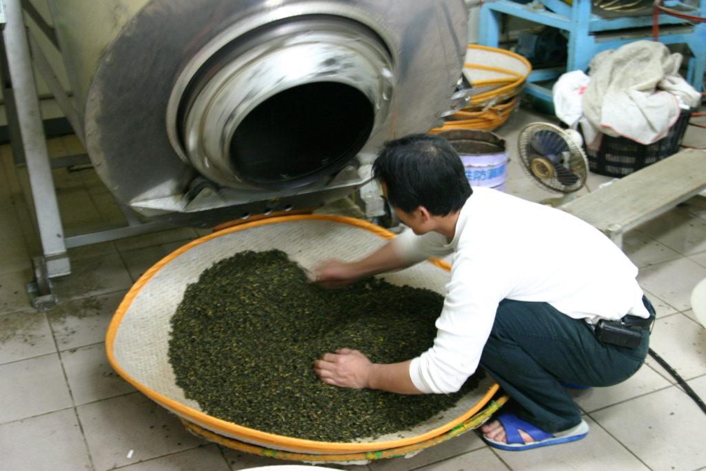 烏龍茶の殺青が終わると茶葉が締まっています