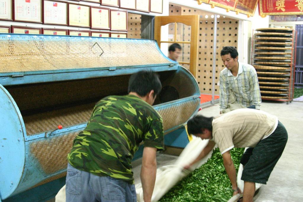 揺青工程 茶葉を竹かごに入れる