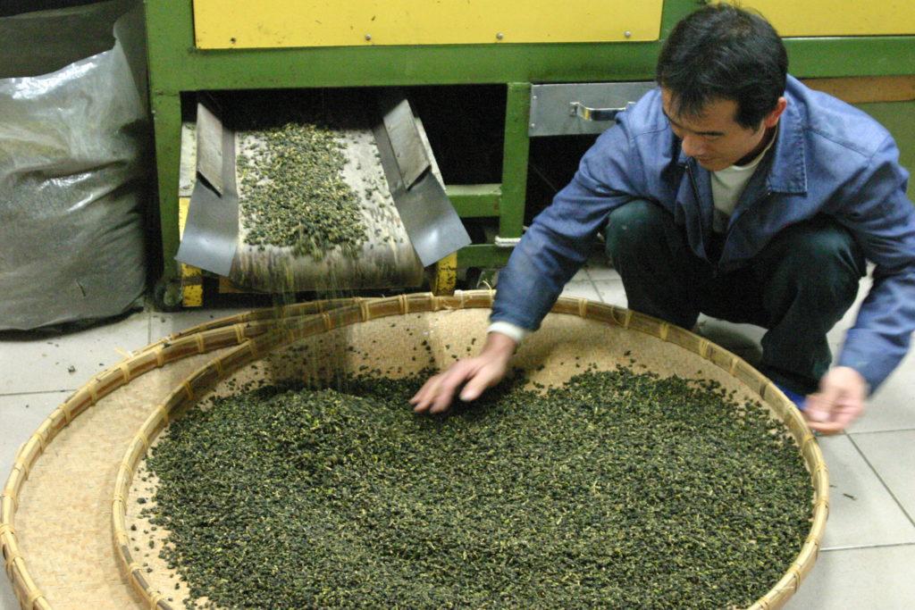 乾燥器から出てきた烏龍茶をチェックする人