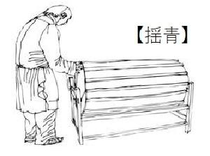 烏龍茶製造工程 揺青