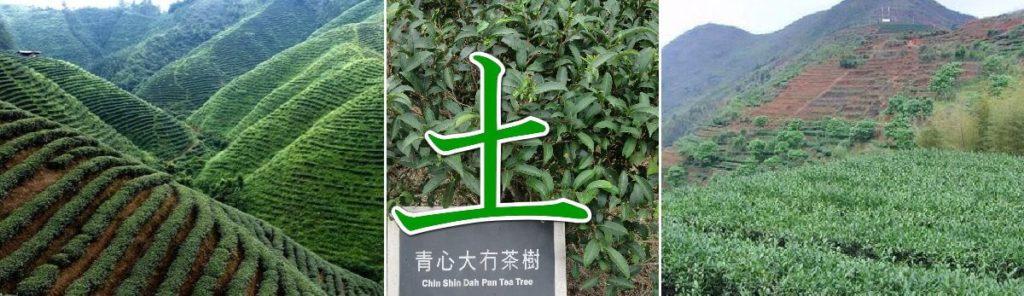中国茶の土を味わうリンクバナー