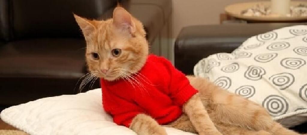 上着を着て横たわりながらさむがる猫