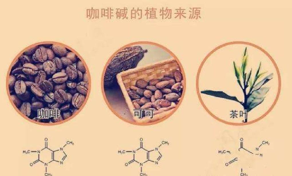 カフェインを含む コーヒーカカオ お茶イメージ