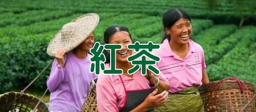 茶畑をバックに茶摘みの人々 紅茶イメージ 中国紅茶のバナー