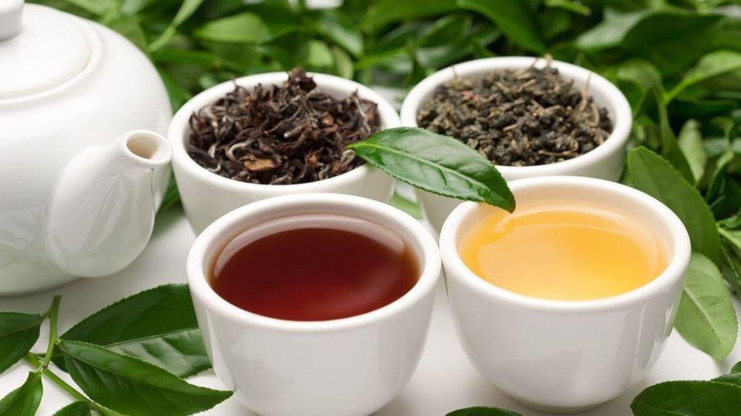 発酵の違う烏龍茶のイメージ