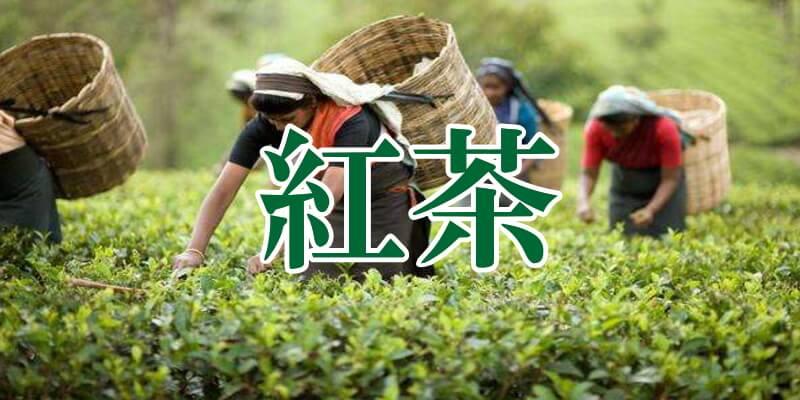 中国紅茶イメージバナー